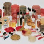 Prepared Media BD BBL™ Selective Streptococcus Agar Plate